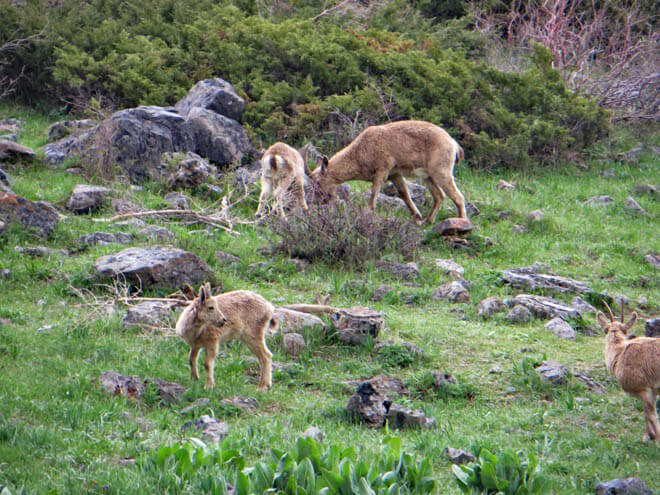 звери, нижнее озеро Сайрамсу