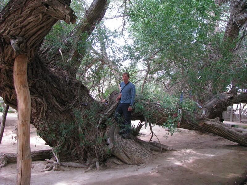 700-летняя ива, Алтын Емель