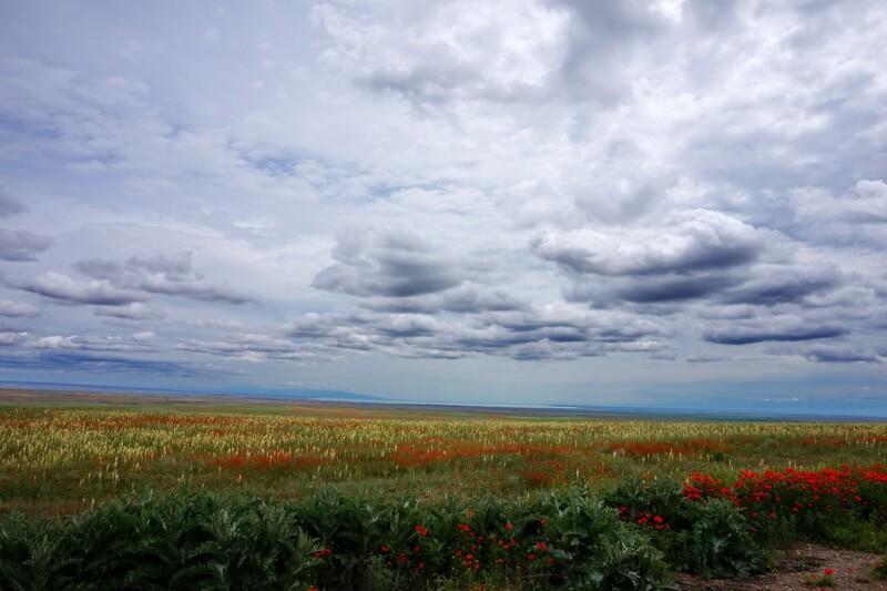 маковый круг, плато Караой