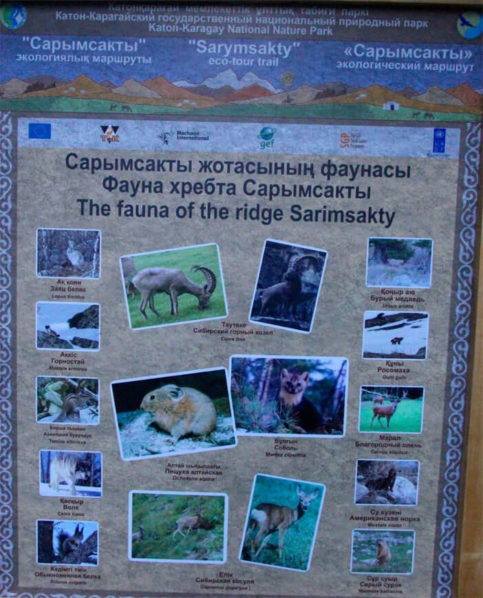 fauna_katon1