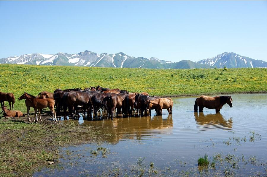 Лошади на озере