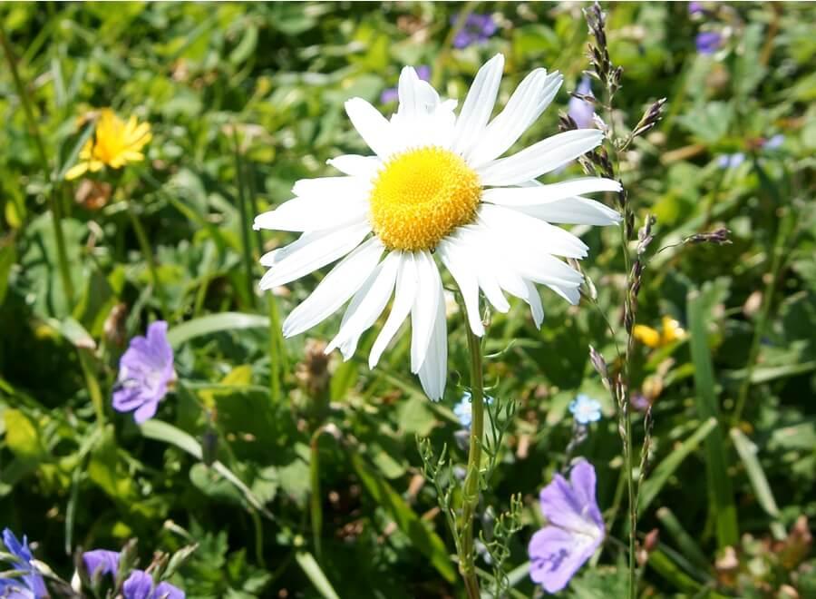 Цветок на плато
