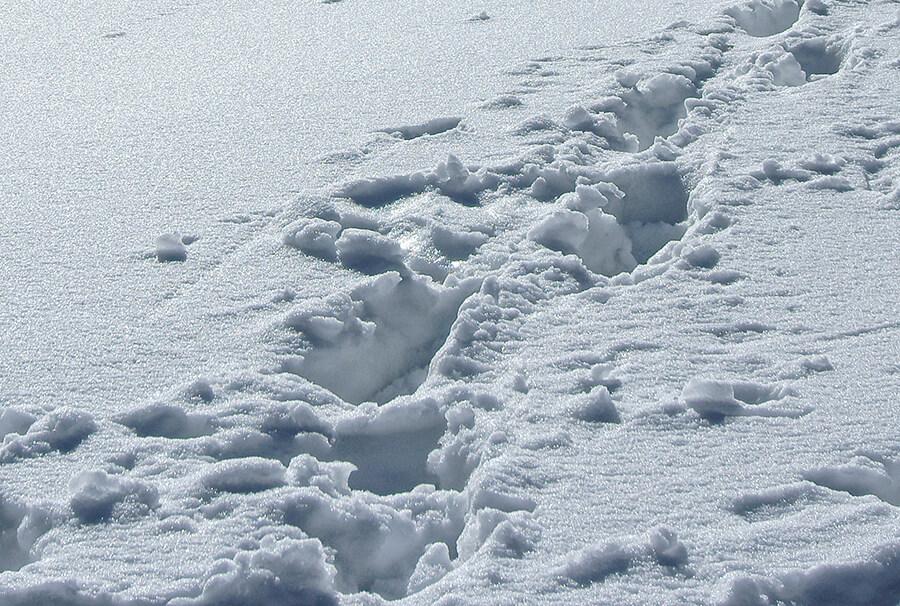 Снег на леднике Богдановича