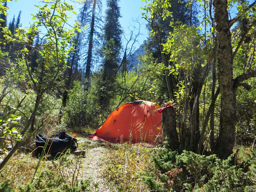 ущелье Иссык, Медвежий лес