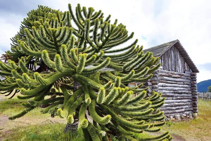 Форт Бульнес, юг Чили